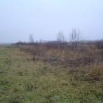 Зарастание луга лесом