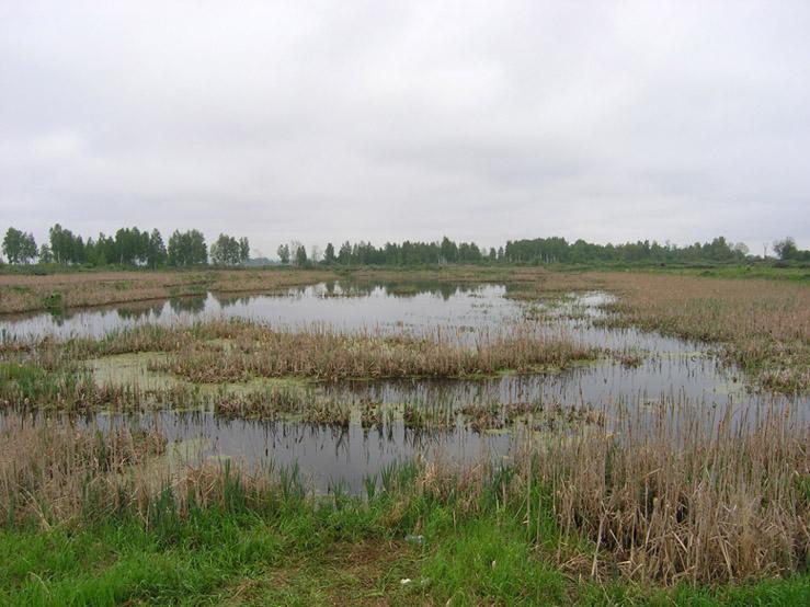 Алтайский край мамонтовский район село гришенское погода