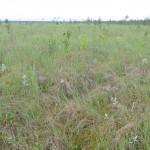 Костолыгинское болото. Фото Д.Кольцова