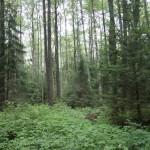Лес у озера. Фото Т.Свиридовой