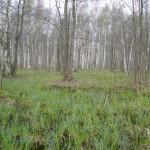 Пойменный лес. Фото С.Конторщикова