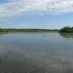 Северная часть озера. 17.06.2009
