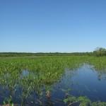 Центральная часть озеро в лето с малой водой. 12.06.2011