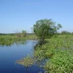 Река Сулать в юго-западной части озера. 11.06.2008