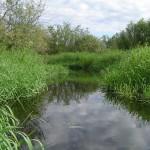Река Сулать в юго-восточной части озера. 8.06.2007