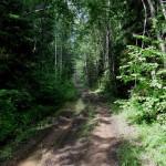 Дорога к истокам Ильменки и Пихтомы